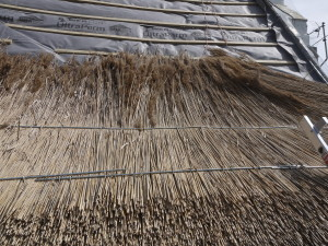 Water Reed Thatching